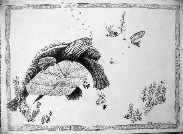 針管筆繪畫《龜和魚》